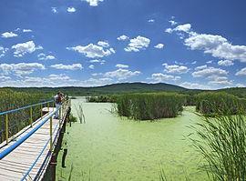 Swamp Arkutino